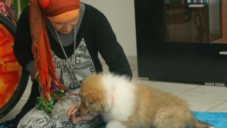 Englischer Collie beim Hundetraining
