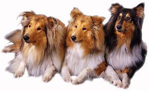 Filiz Hunde