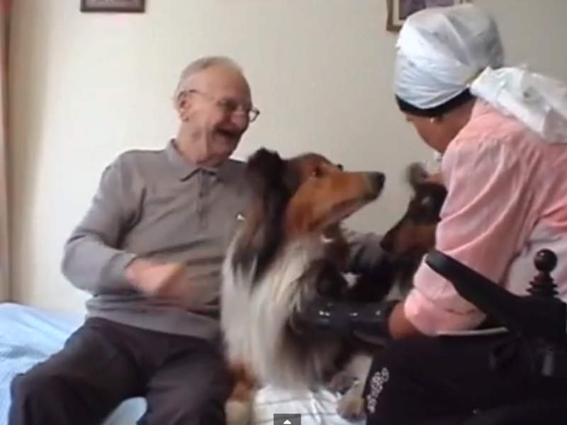 Tiergestützte Therapie Senioren