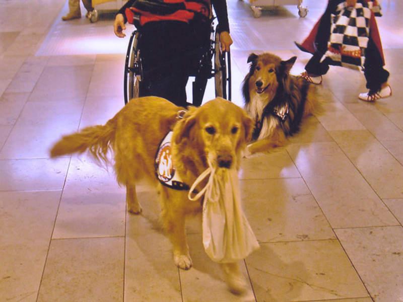 Hund trägt Einkaufstasche
