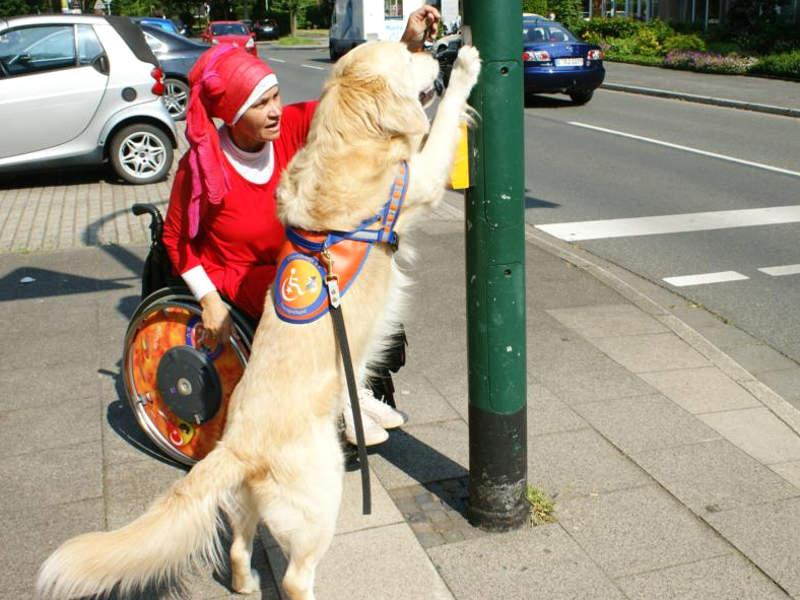 Hundeausbildung mit Filiz Erfurt