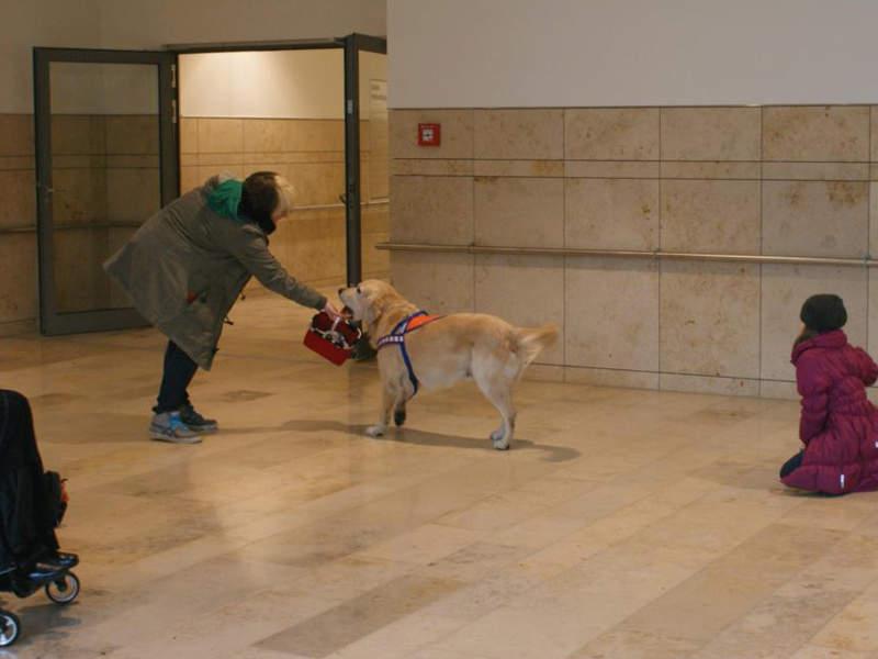 Therapiehund Akiba übergibt Körbchen