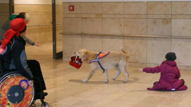 Therapiehund trainiert