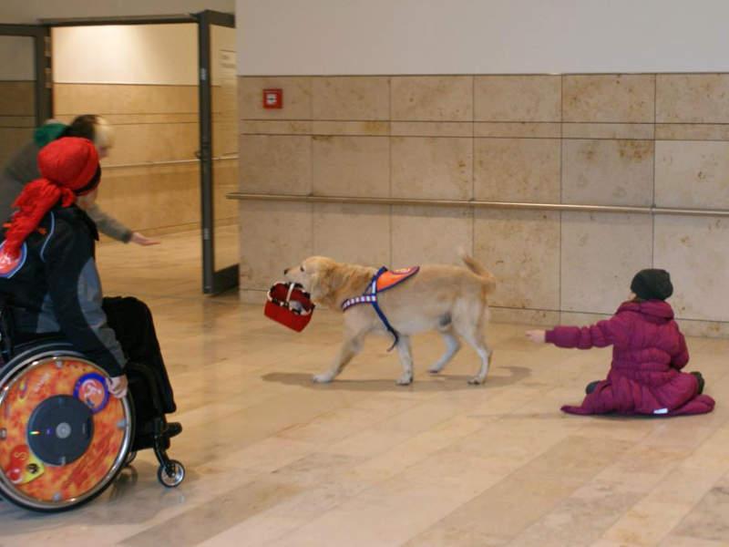 Therapiehund trägt Körbchen