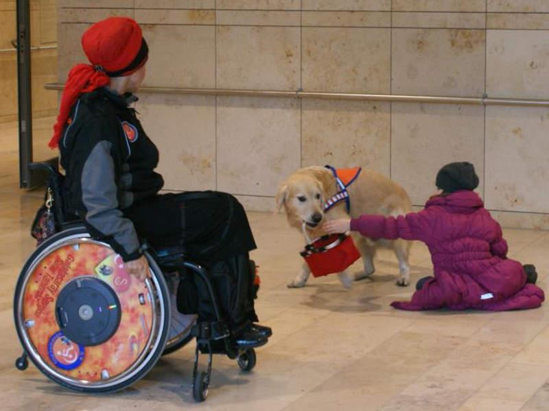 Therapiehund trainiert Botengänge