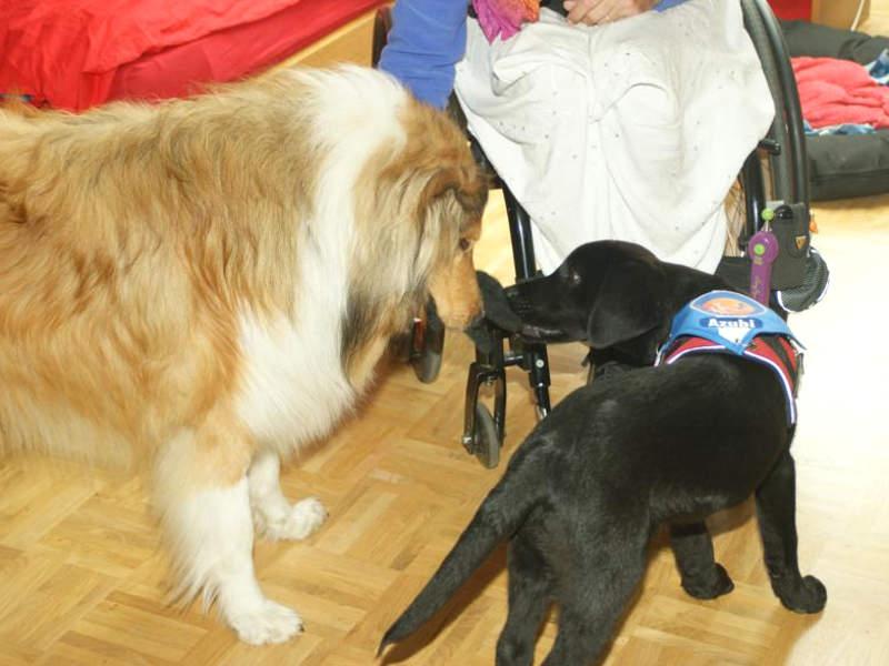 Tradieren bei Ausbildung zum Therapiehund
