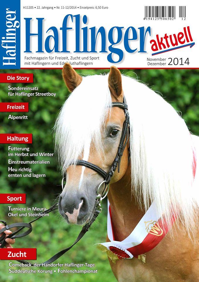 haflinger1